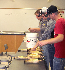 Northeast students hand pick, count corn kernels for emergence study